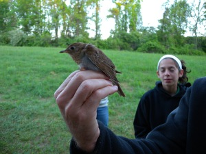 First Veery of the season