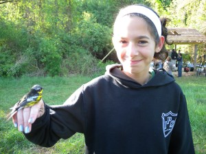 Isabel with Magnolia warbler
