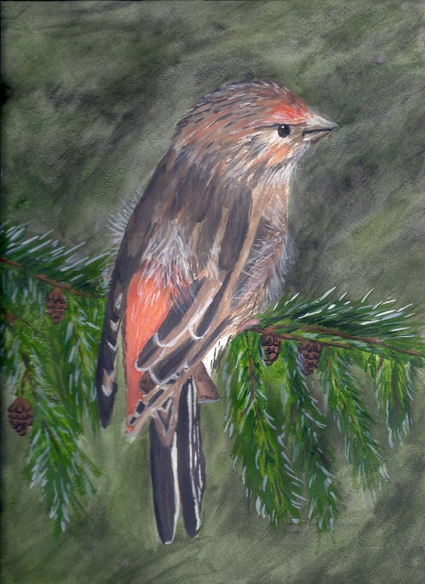 Birdley Watercolor print by Blake Goll