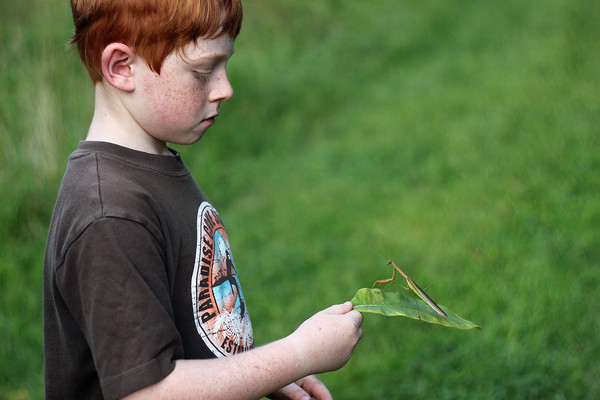 PA Young Birder observes a Praying Mantis