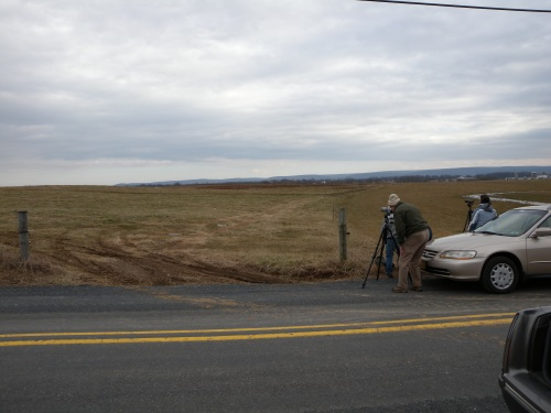 Birders viewing Snowy Owl on Mud Level and Duncan Rd, Cumberland County, PA.