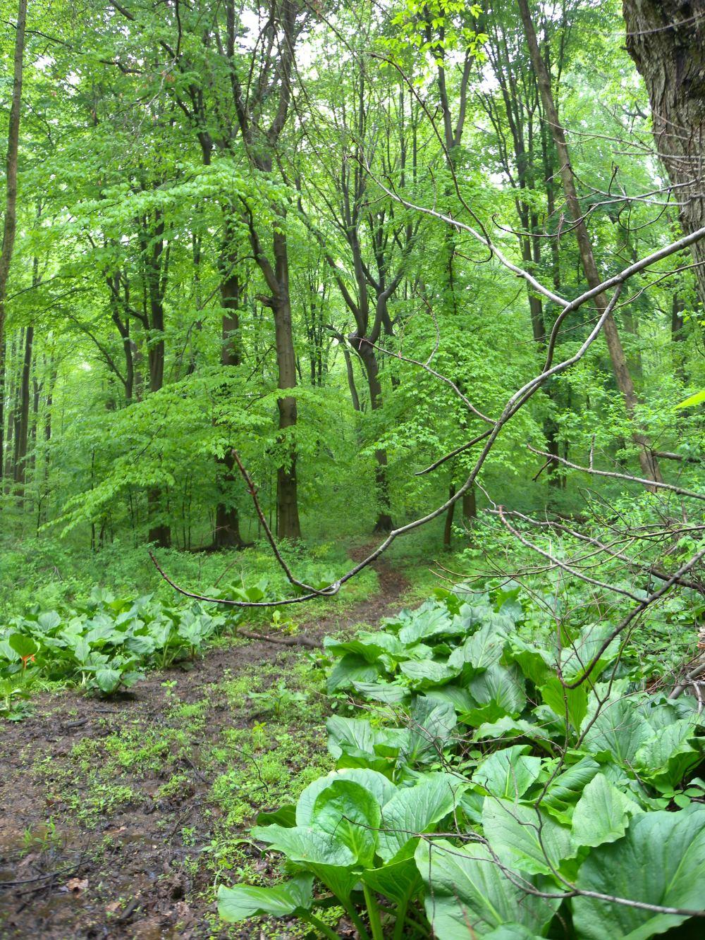 Rushton Woods.  Photo by Blake Goll