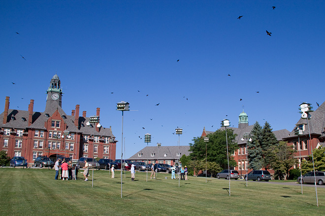 The Glen Mills School Purple Martin colony.  Photo by Adrian Binns.