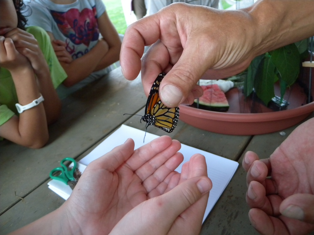 Passing Monarch to child for release.  Photo by Blake Goll.