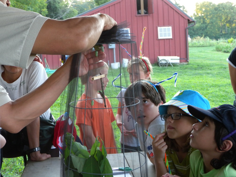 Young Birders looking at Monarch chrysalis.  Photo by Blake Goll.