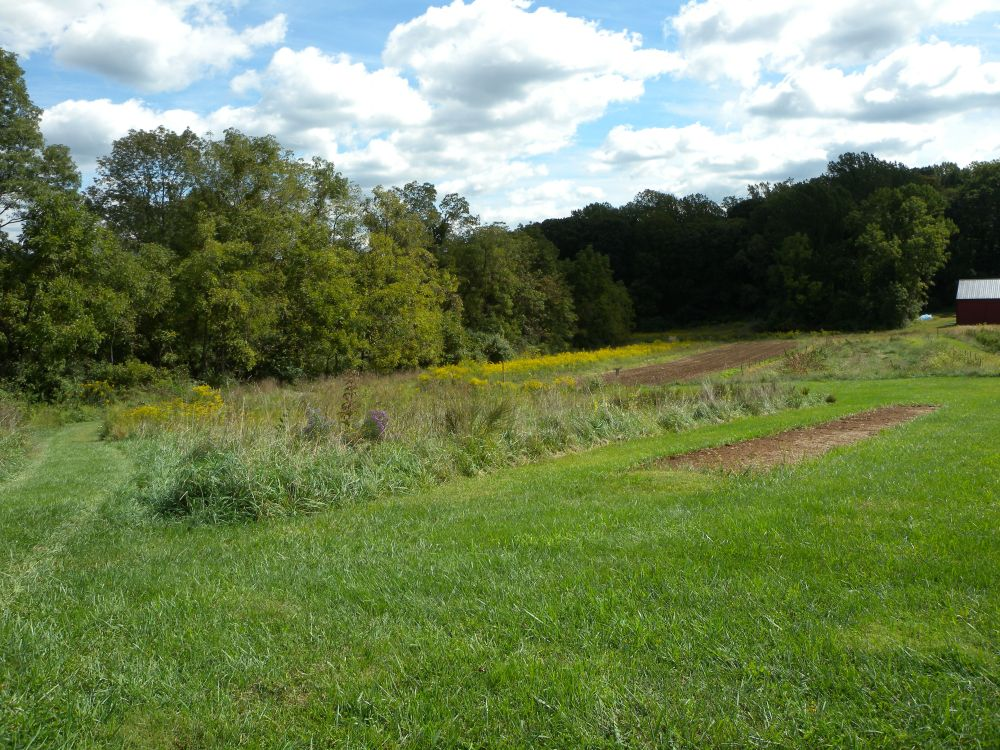 Asters and goldenrod at Rushton Farm.  Photo by Blake Goll.