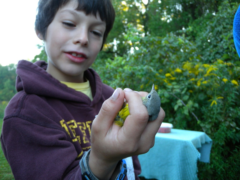 Child with Magnolia Warbler (hatch year female) before release.  Photo by Blake Goll