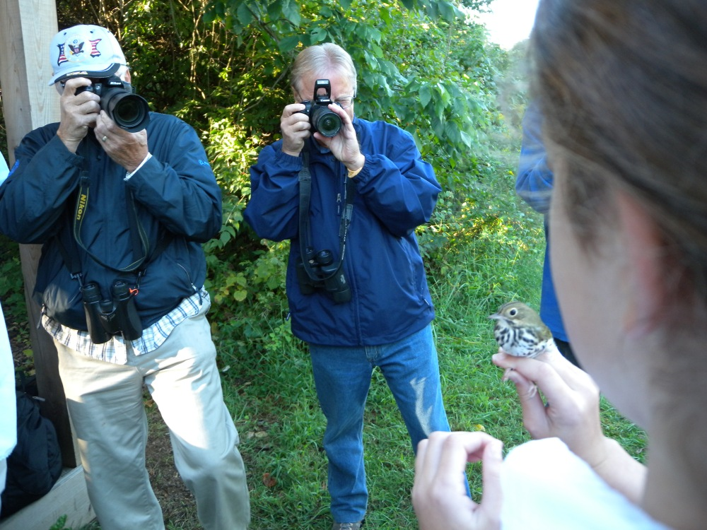 Ovenbird getting his picture taken before release.  Photo by Blake Goll.