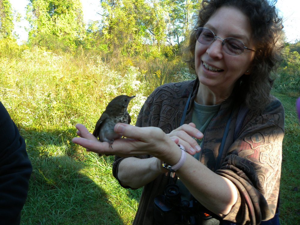 Widener student/ bird whisperer with Gray-cheeked thrush.  Photo by Blake Goll.