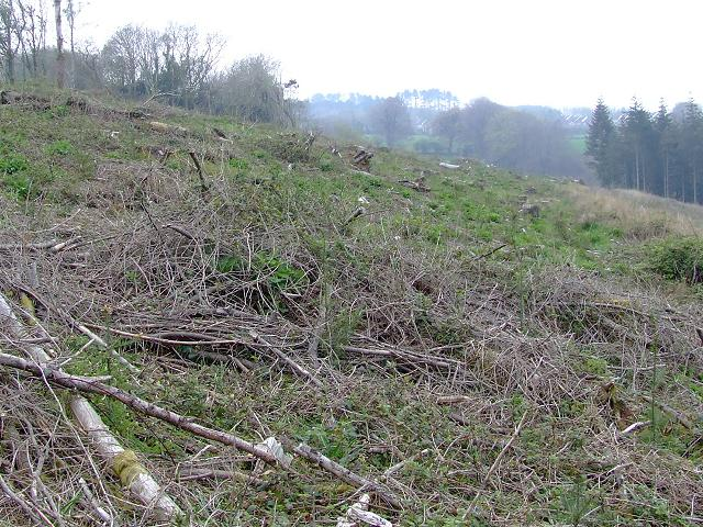 An Early Successional Scrub area that was clear cut.