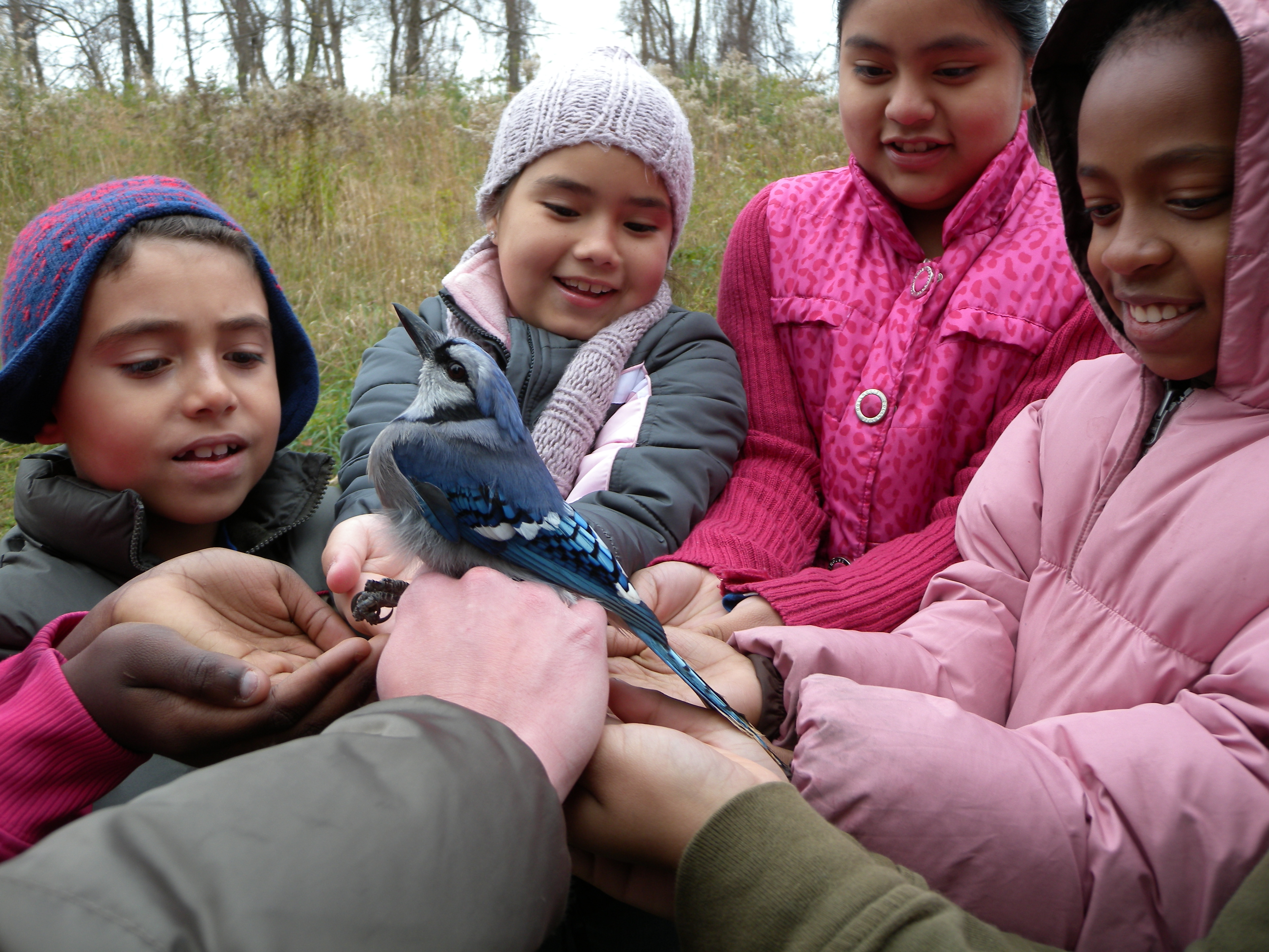 Melton Center students releasing Blue Jay together.  Photo by Marilyn Smith.