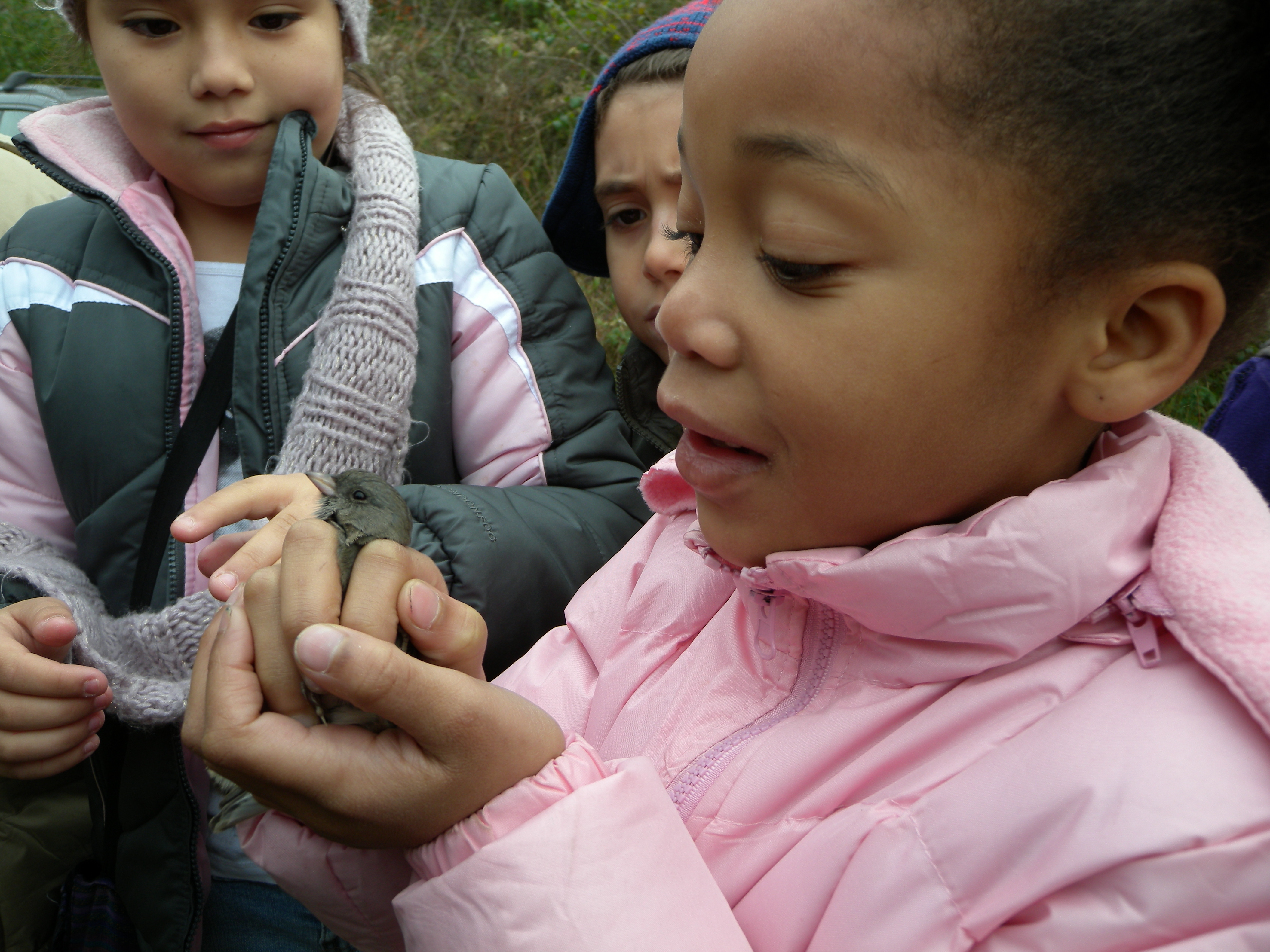 Melton student with Junco before release.  Photo by Blake Goll.