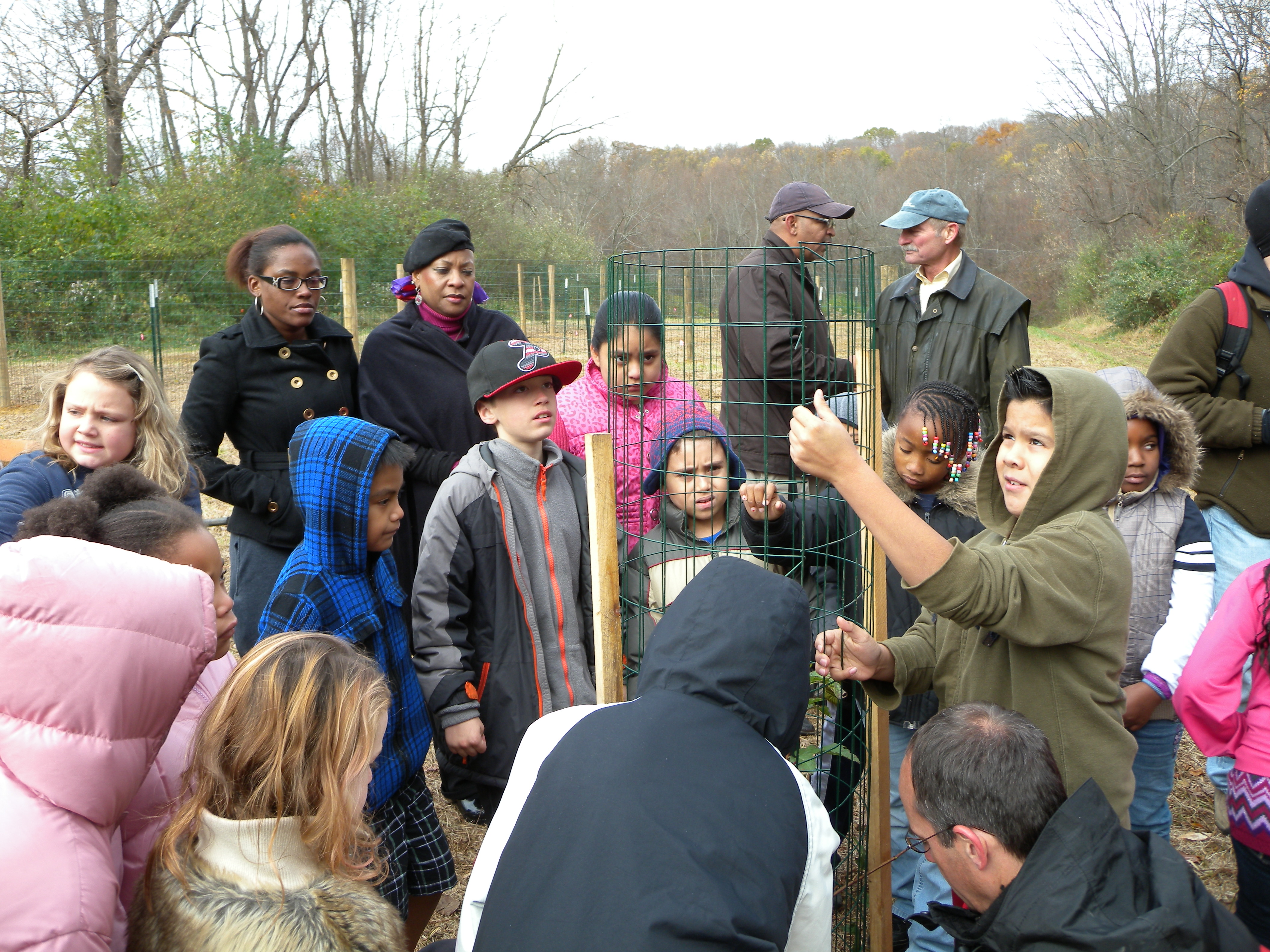 Melton students learning to cage shrubs.  Photo by Blake Goll.