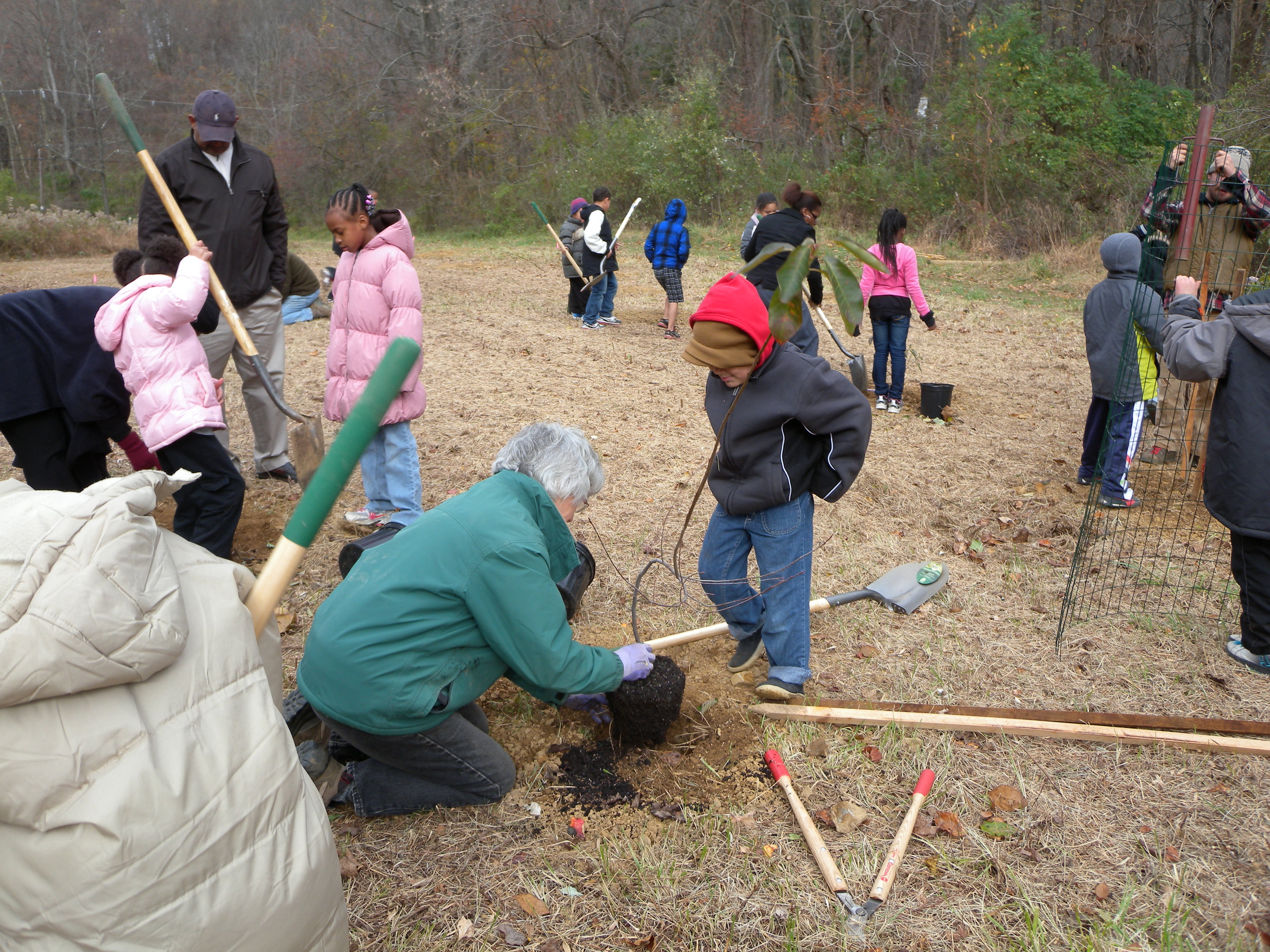 The Melton students get to work planting and caging shrubs!  Photo by Blake Goll.