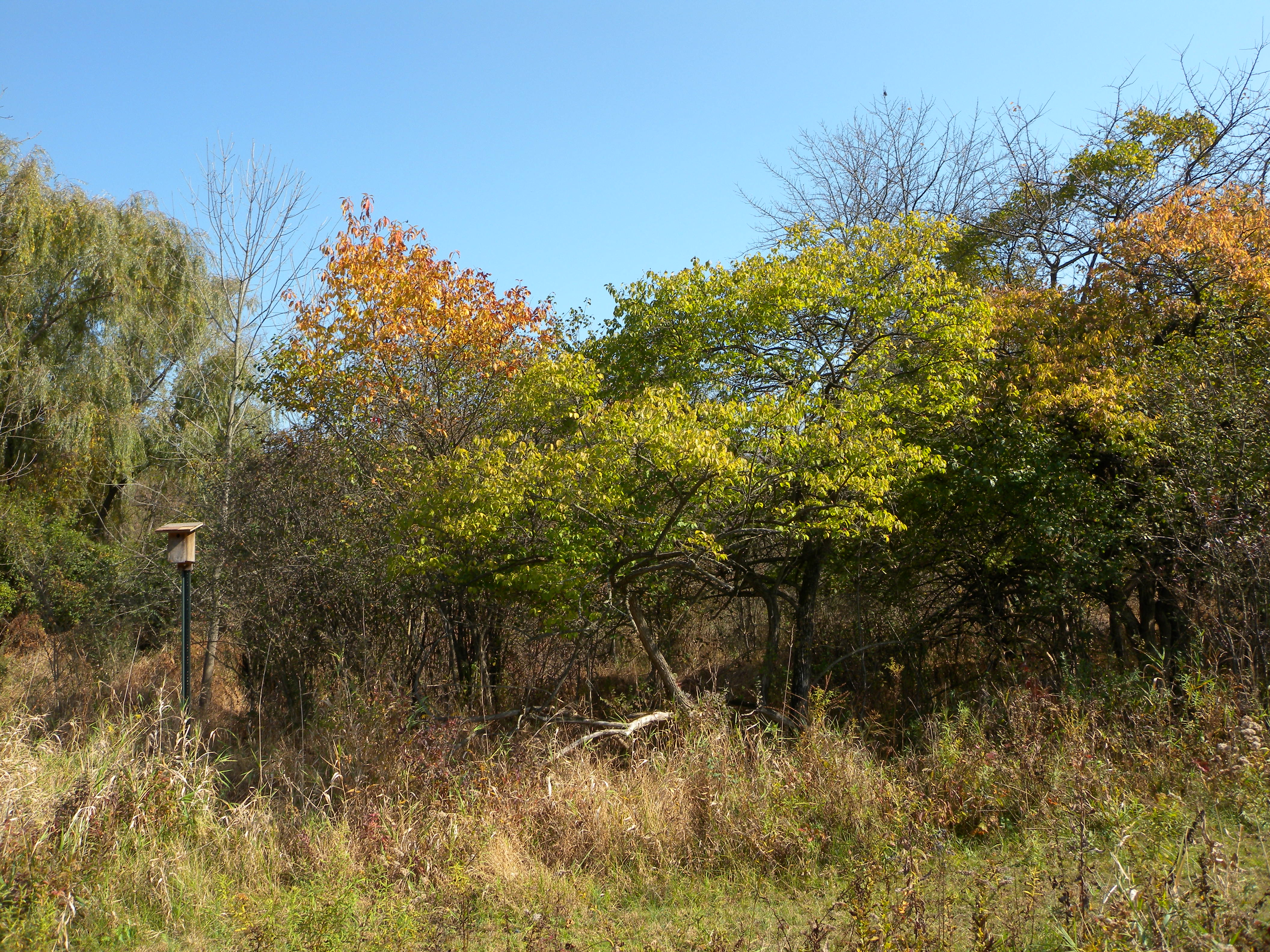 Early Successional Scrub Habitat at Ashbridge Preserve.