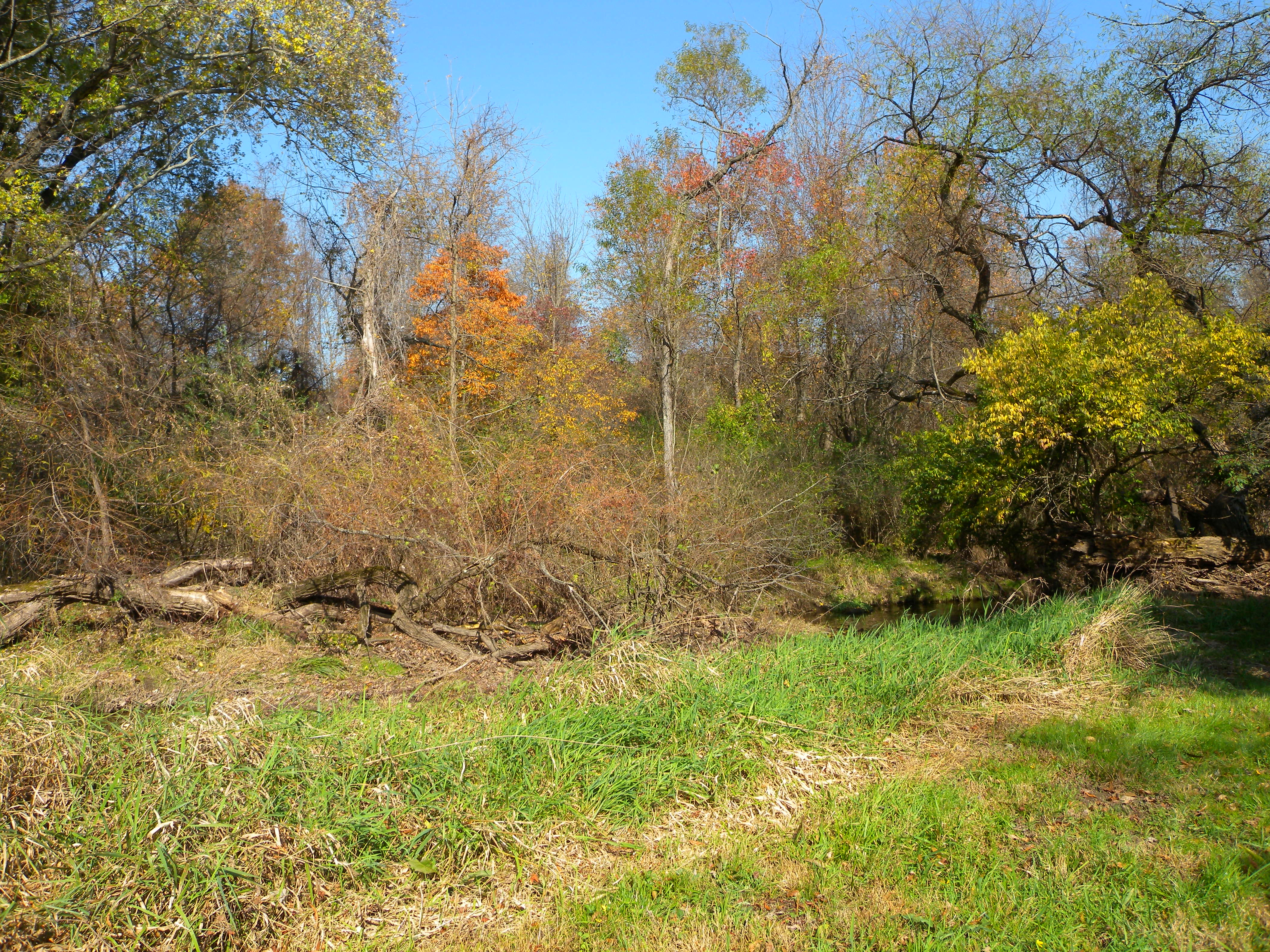 """This shrubby habitat may include invasive plants and may look """"messy"""", but it is stable and provides great habitat structure for birds."""