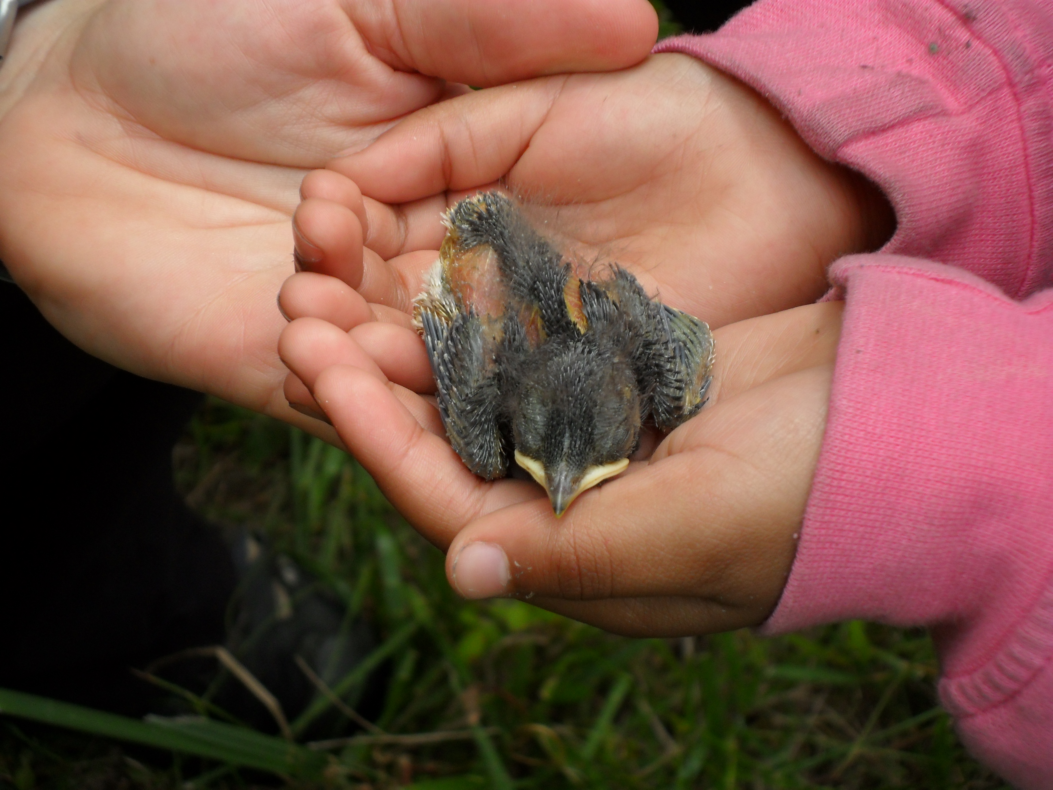 Child with baby bird.