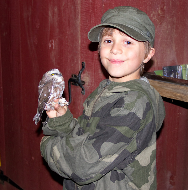 Child holding a Saw-whet Owl from Rushton's shrub habitat.  Photo by Adrian Binns.