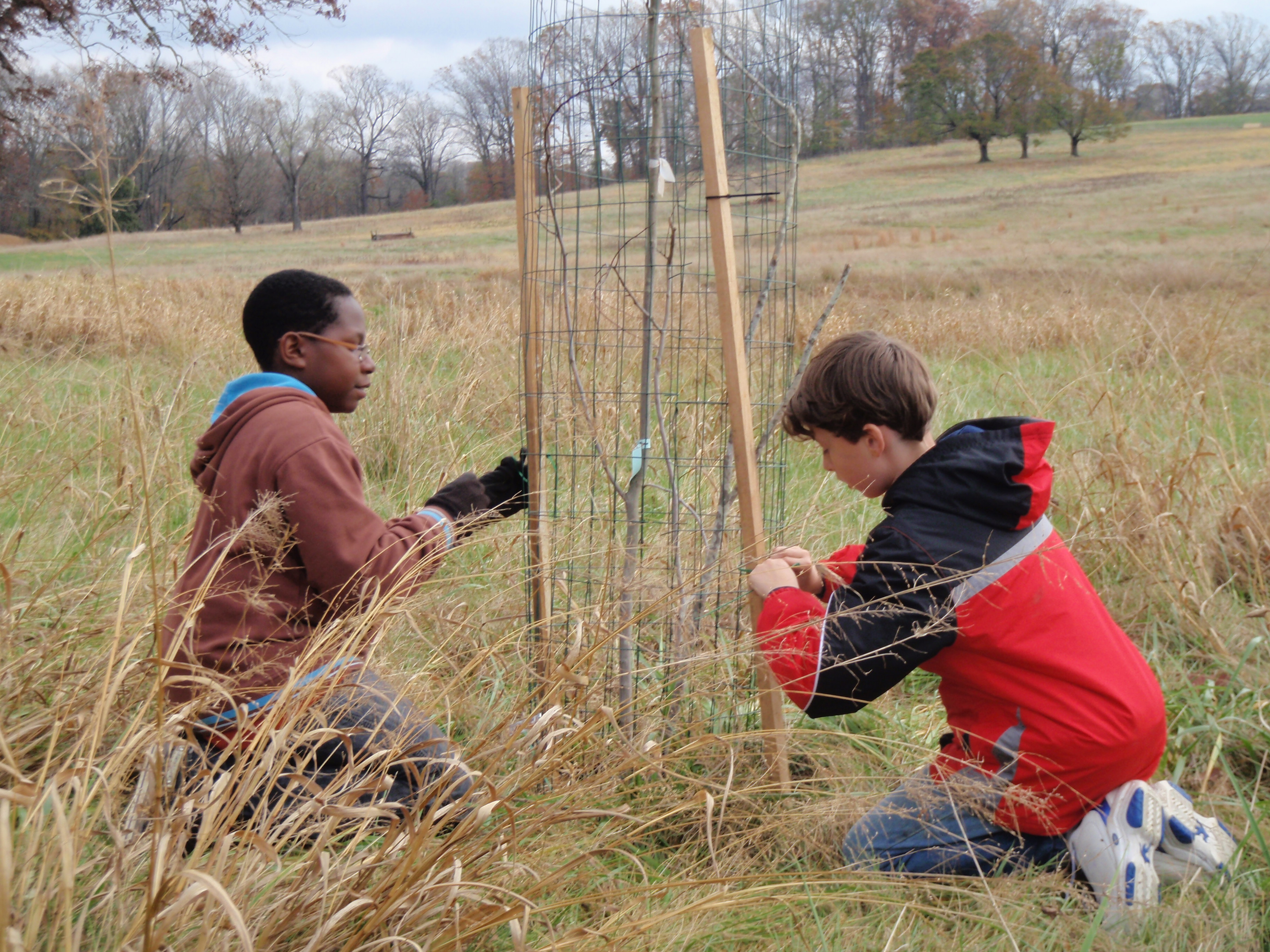 Students setting deer fence around a shrub.