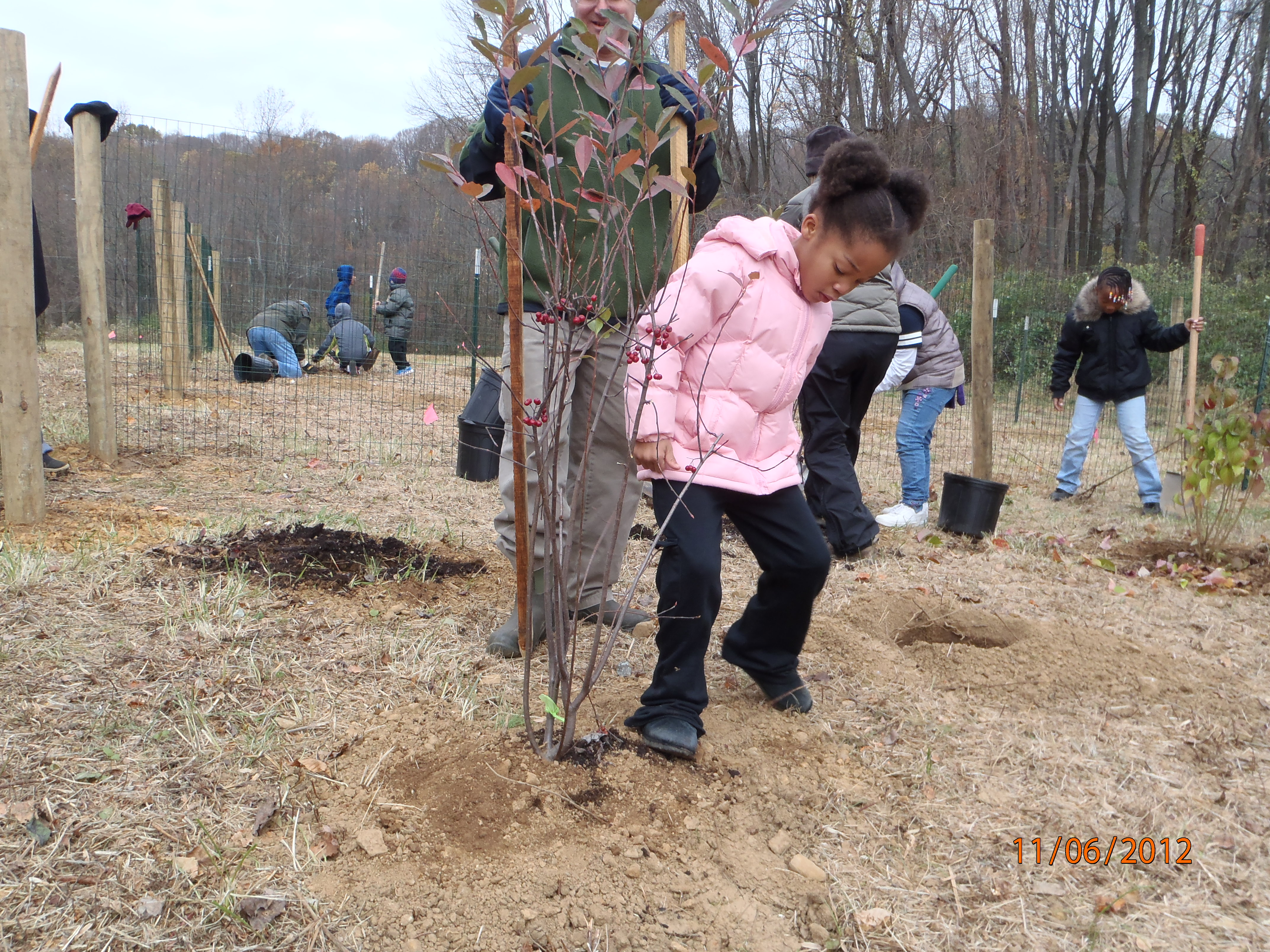 Melton student packing in the shrub.  Photo by Bill Hartman.