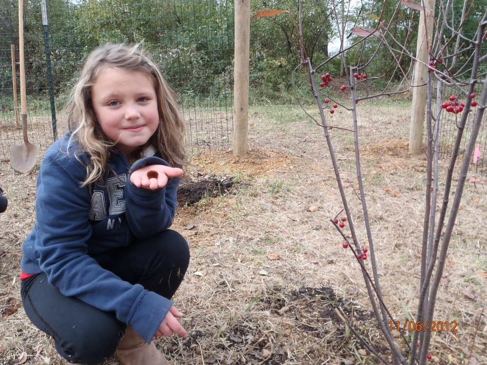 One Melton student found a Woolly Bear caterpillar while planting shrubs!  Photo by Bill Hartman.