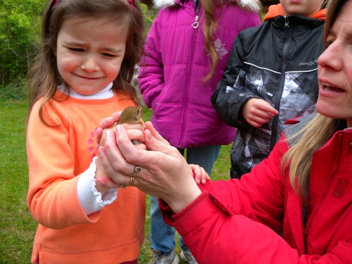 Child overcoming her fears to touch a Veery.  Photo by Blake Goll.