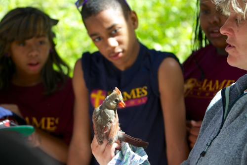 Saint James students observe Northern Cardinal.  Photo by Nat Hamilton