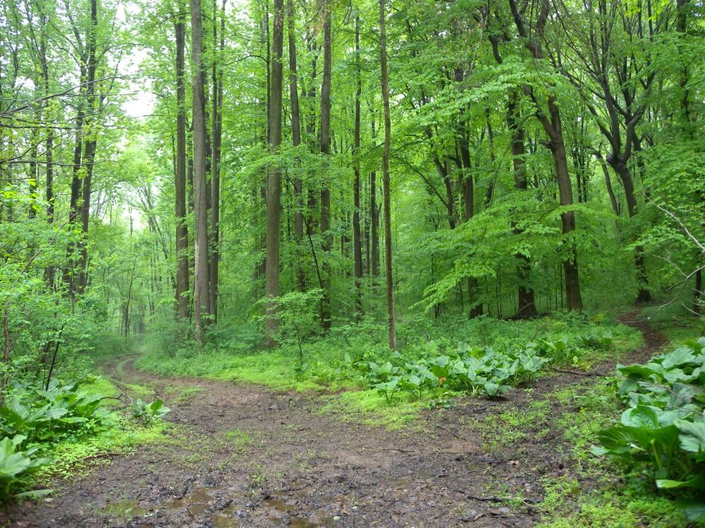 Rushon Woods.  Photo by Blake Goll