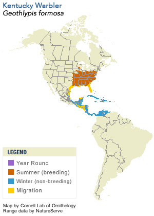Kentucky warbler range.  From Cornell Lab of Ornithology All About Birds website.