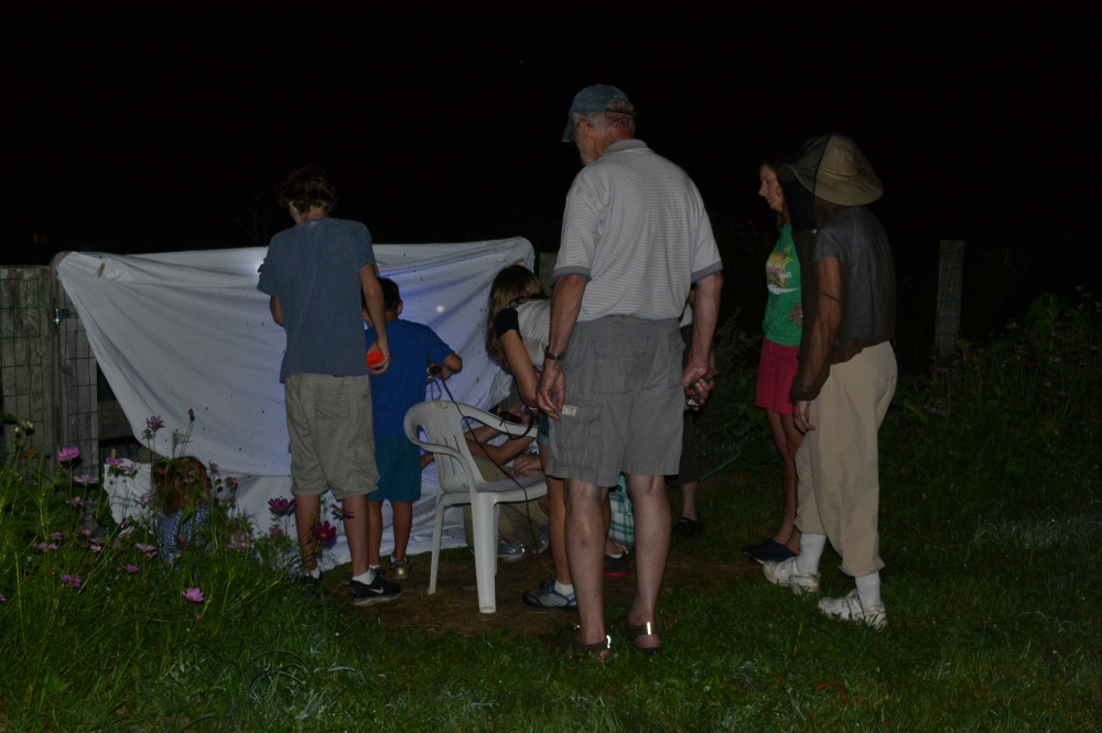 Junior Birders at Rushton investigating moths on a sheet.