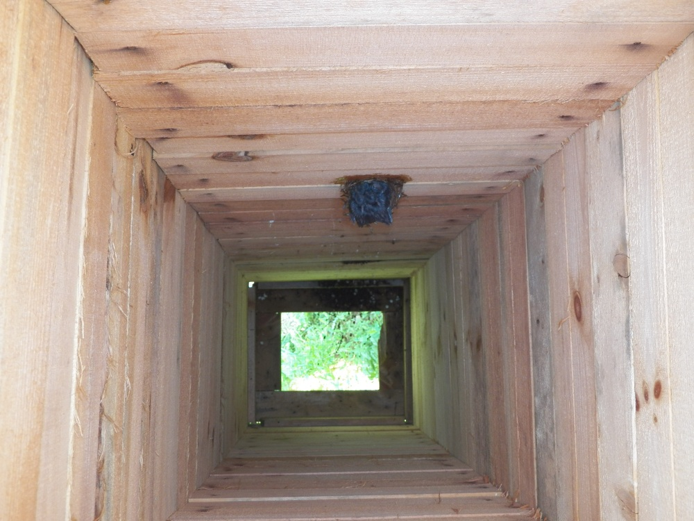 The view of the Chimney Swift nest, looking down from the top of the tower.
