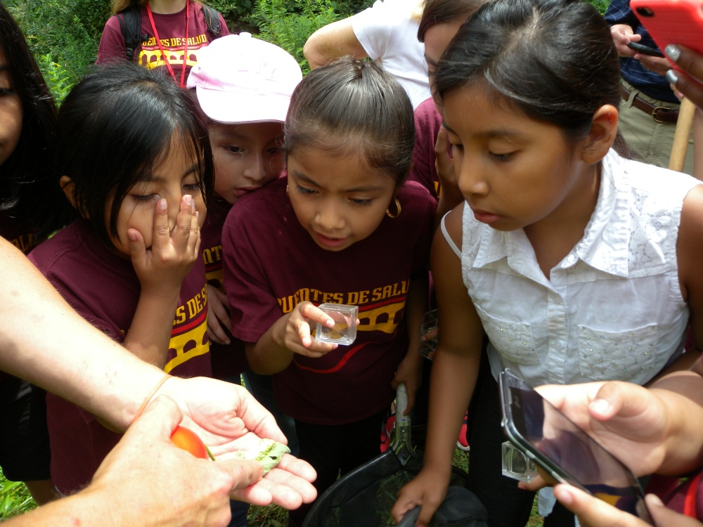 "Mighty Writers got a close-up view of agroecology in action when Farmer Fred showed them a tomato hornworm pest that had been ""taken care of"" by a paper wasp who laid her eggs on its body."