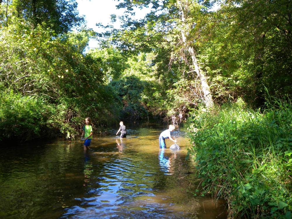 Jr. Birders sampling for macroinvertebrates in Ridley Creek at Ashbridge Preserve.  Summer 2014.