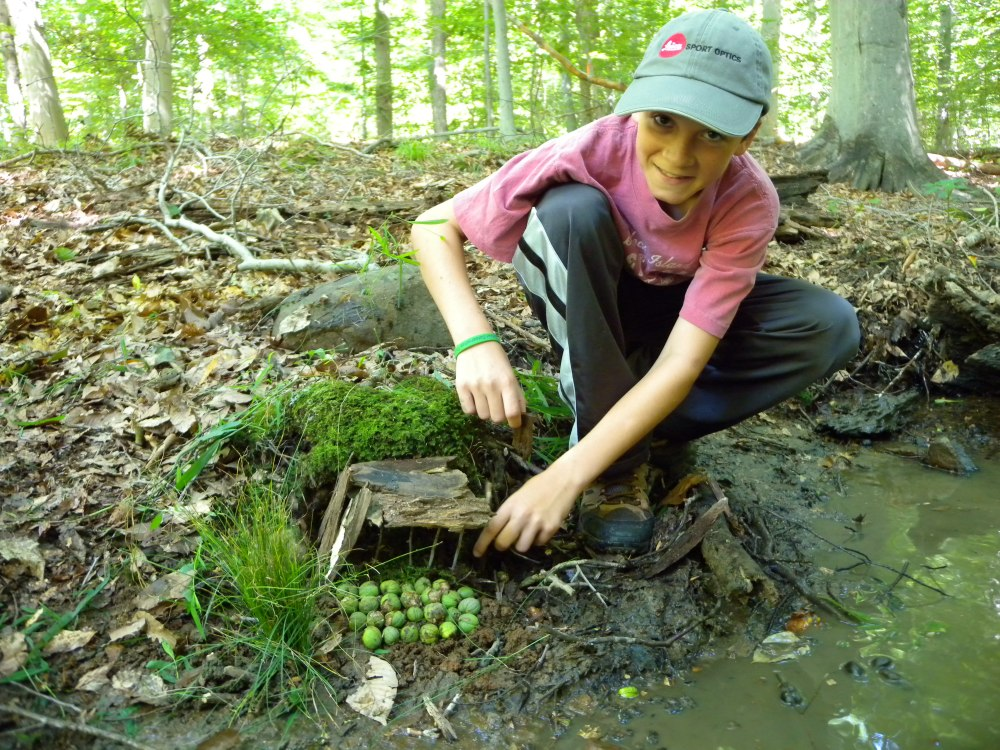 "One of our ""senior"" young birders building a Toad Abode, Summer 2014."