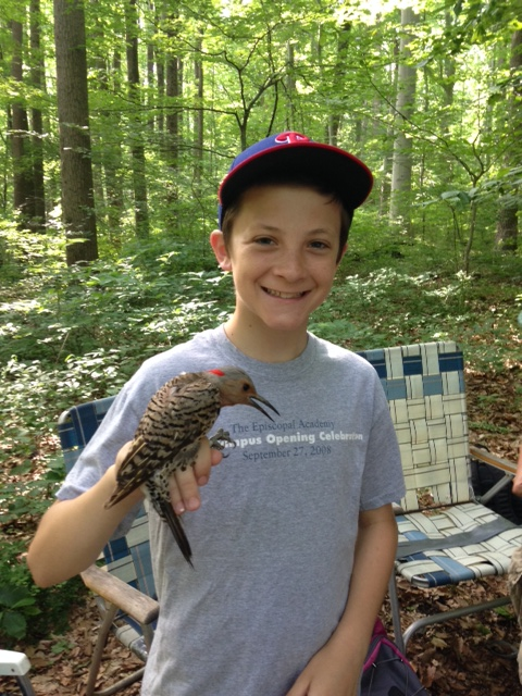 "Jay Familetti is one of Young Birders who has been attending our programs for years and has ""graduated"" to volunteering at the bird banding station!  Here he is with a Northern Flicker, Summer 2014."