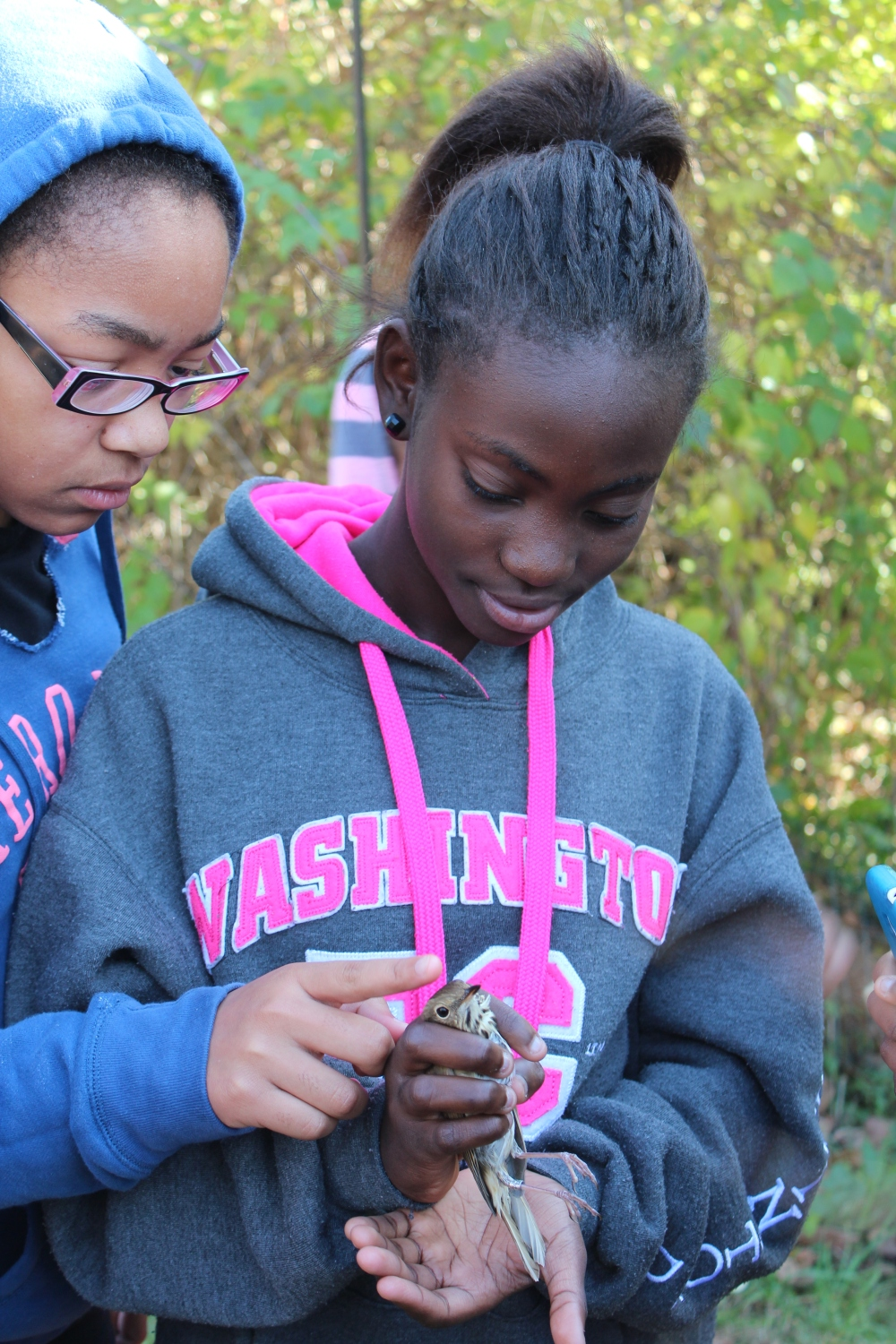 Melton students reverently observe a Swainson's Thrush before release.  Fall 2014.