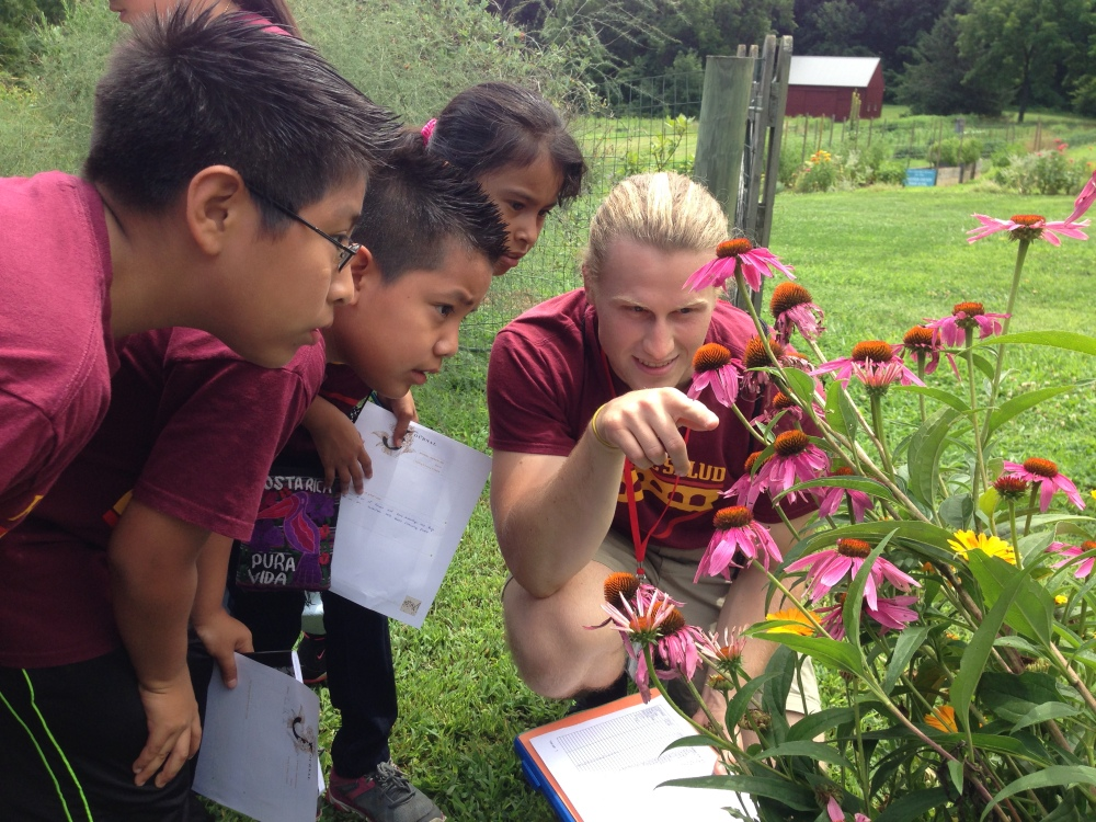 Mighty Writers discovering more native insect in the garden.
