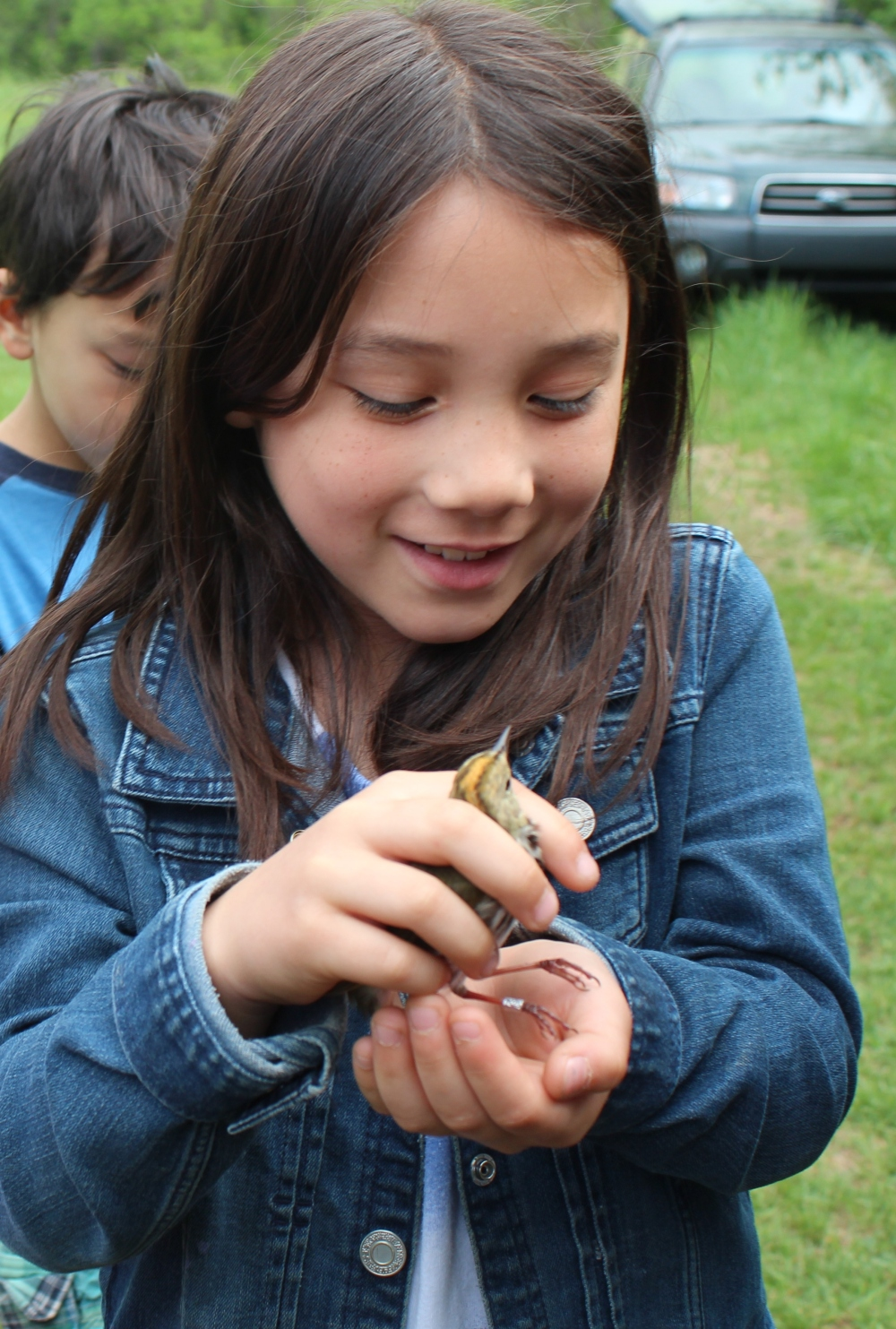 Child holding a banded ovenbird briefly before release at Rushton this May.