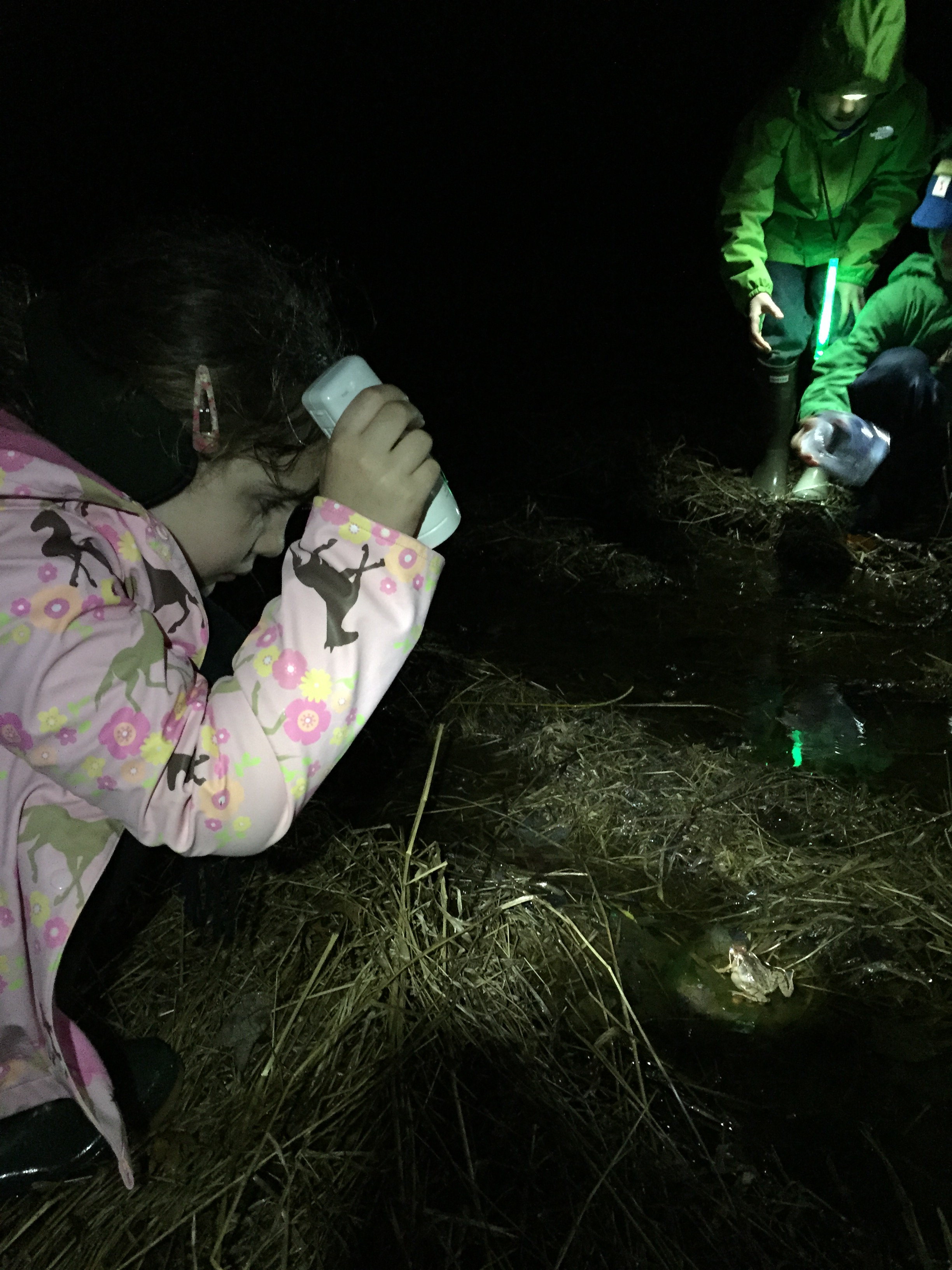 A Jr. Birder shines her light on a Wood frog while surveying a vernal pool last March. Photo by Blake Goll