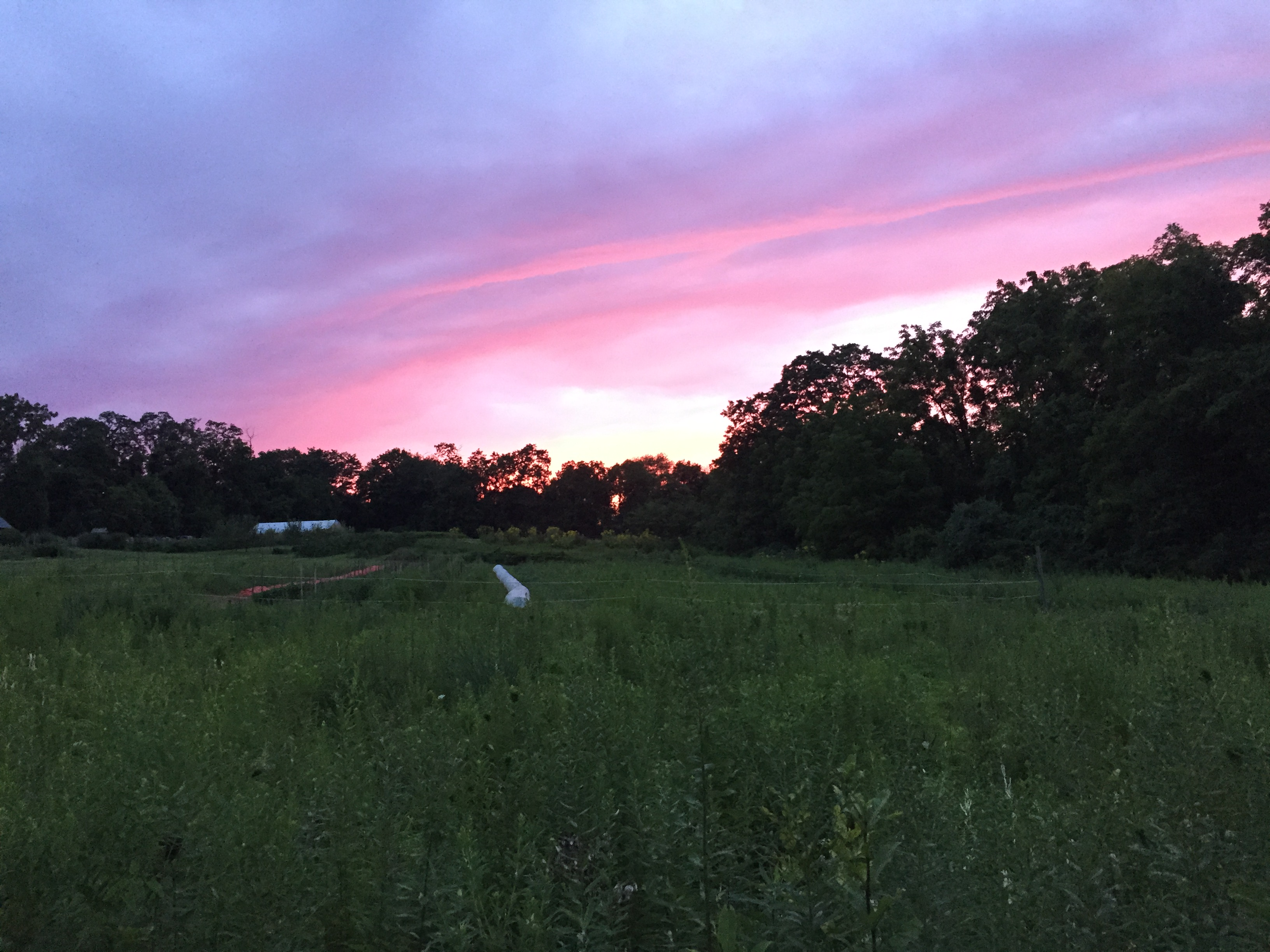 Dusk at Rushton Farm (in summer). Photo by Blake Goll