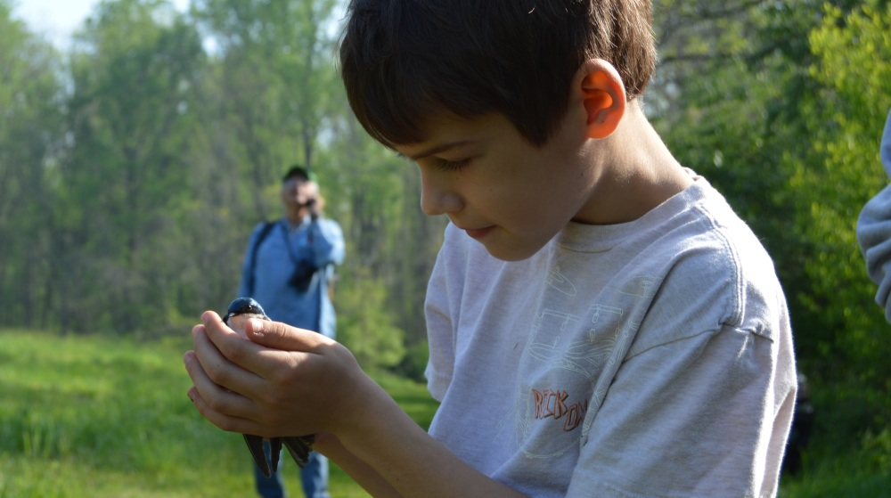 A young naturalist marvels at a shimmering Tree Swallow before release. Photo by Blake Goll/Staff