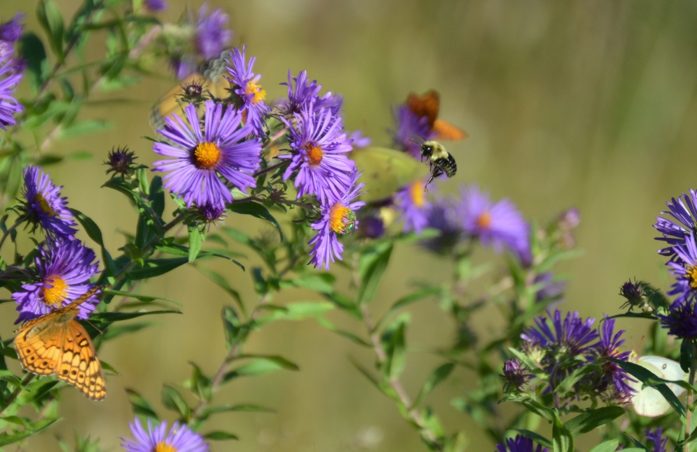 I spy with my little eye...seven pollinator critters in this dreamlike whir of life. Photo by Blake Goll/Staff.