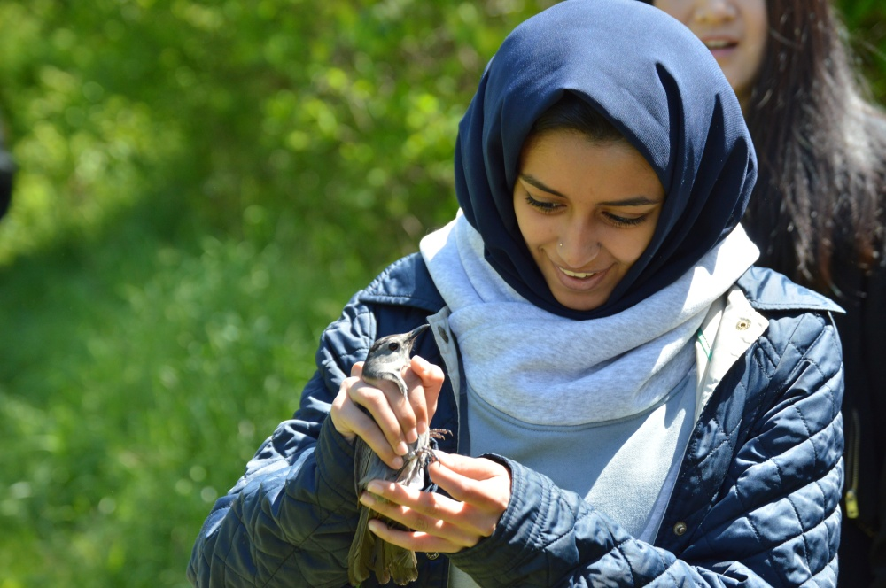 Saint Joseph's University student helping to release a Gray Catbird this spring. Photo by Blake Goll/Staff