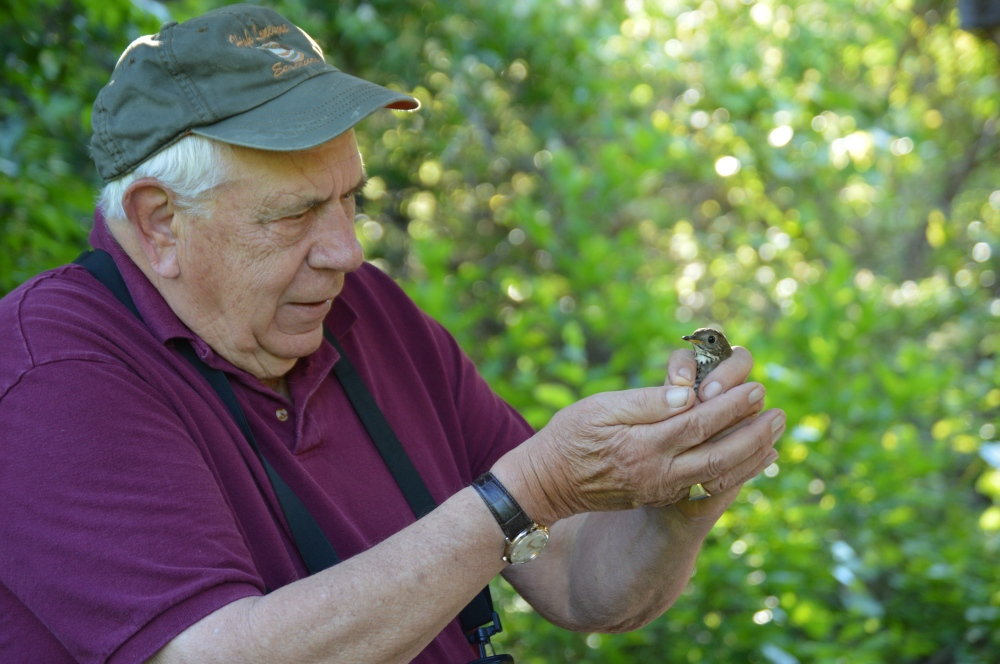 Dick Eales, Chair of the Willistown Conservation Trust's Bird Conservation Committee admiring a Gray-cheeked Thrush before release this May. Photo by Blake Goll/Staff
