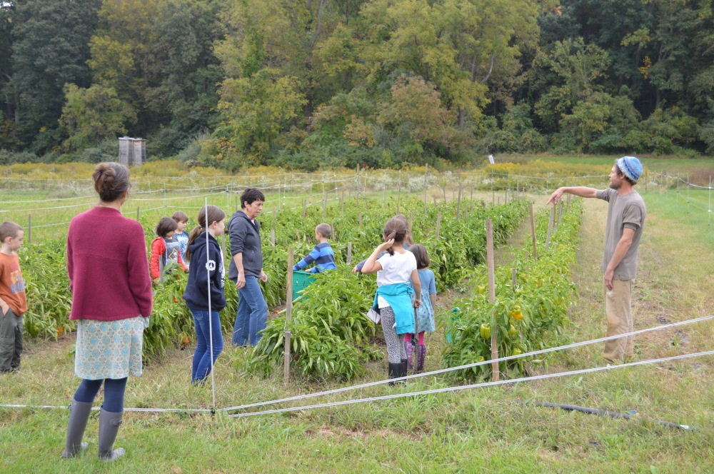 School children helping to harvest peppers at Rushton Farm last October. You can see the fields of goldenrod and Rushton Woods in the background. Photo by Blake Goll/Staff