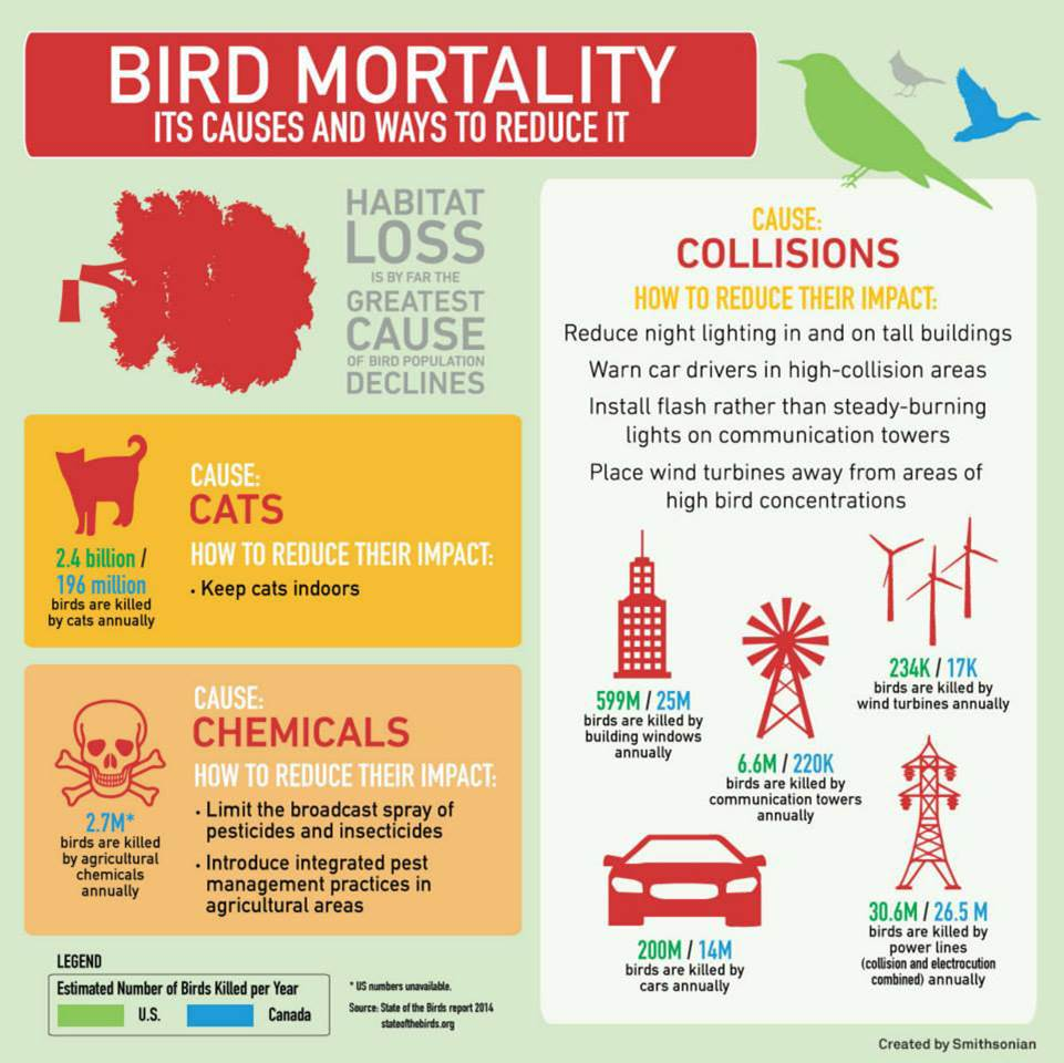 Bird Mortality Infographic by Smithsonian